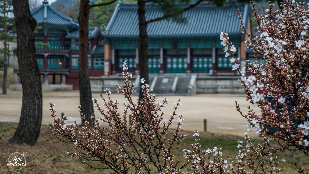 Best Places to see Cherry Blossoms in Seoul!